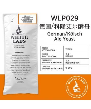 WLP029 德国/科隆爱尔酵母